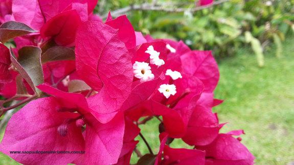 flores em sao paulo