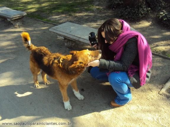 Cachorros de Santiago