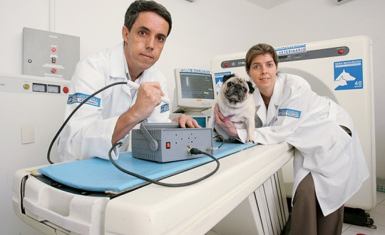 emergencia veterinaria