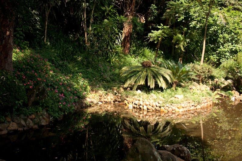 Parque da Aclimação - natureza