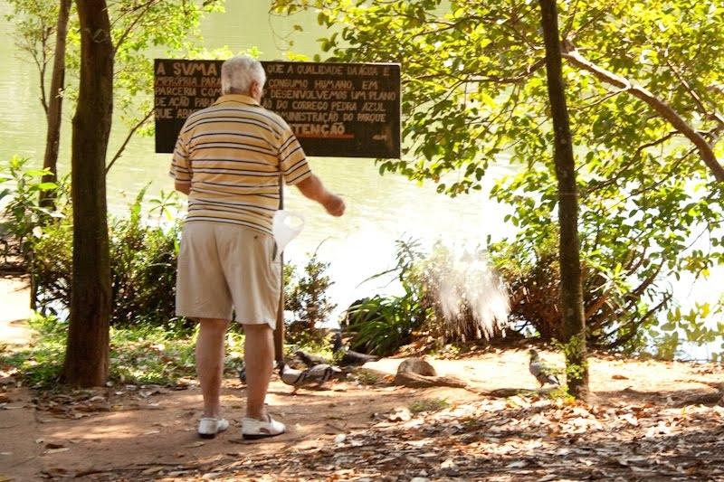 Parque da Aclimação - pombas