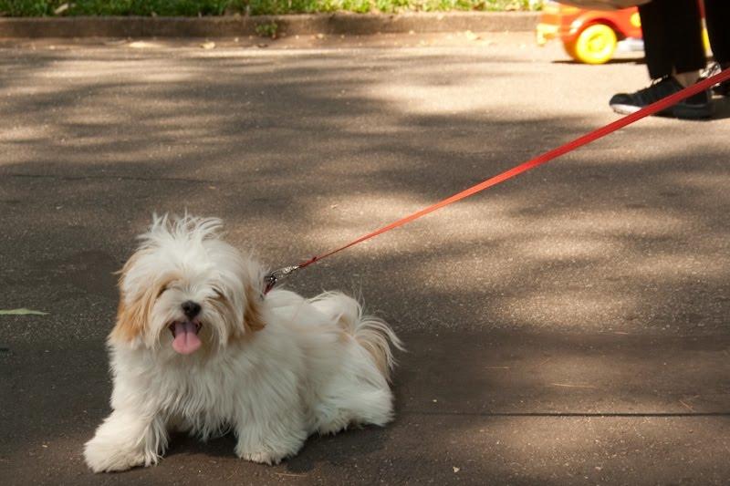 Parque da Aclimação - cachorro